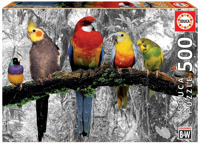 500 Birds on the jungle