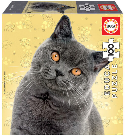 100 British Shorthair